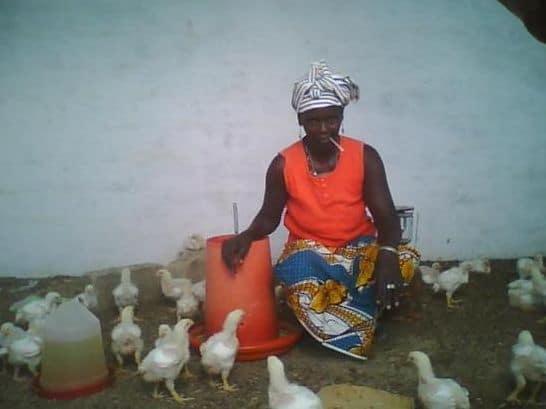 Aviculture : Les professionnels de la sous région en quête de marque