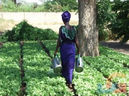 Libéralisation de l'agriculture : L'Ipar présente les conséquences et donne des perspectives
