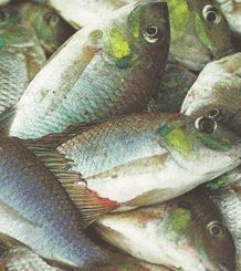 Faiblesse des ressources aquacoles : La Fao appelle les acteurs à redoubler d'efforts