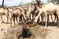 Afrique de l'Est: La liberté de mouvement va faciliter la vie des éleveurs