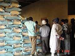 Stockage et commercialisation du riz dans la vallée - Le Cncr prend les devants
