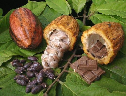 Le nouvel accord sur le cacao est favorable, selon les producteurs