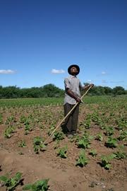 Afrique : des perspectives pour l'avenir de l'agriculture