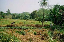 Actualités sur le développement rural ACP-UE
