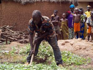 La Côte d'Ivoire au chevet de son agriculture avec FCFA 896 milliards
