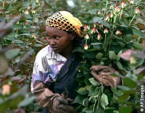 L'agriculture et la sécurité alimentaire sont deux grands thèmes de l'AGOA 2010