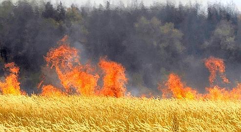 Inquiétudes sur l'envolée des prix du blé