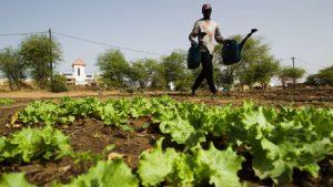 """Vers la création d'une """"assurance récoltes"""" dans les pays de l'UEMOA"""