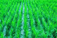 Suivi de la Campagne agricole 2010-2011 au Burkina