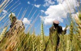 Spéculateurs en quête de terres arables