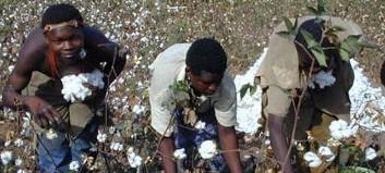 Le Sénégalais, Moussa Sabaly aux commandes de l'APROCA