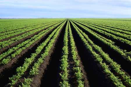 La France entend gérer l'attribution des terres agricoles en Afrique
