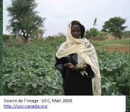 Enjeux de la souveraineté alimentaire en Afrique sub-saharienne