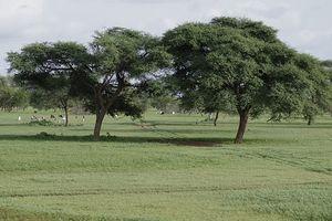 Sahel : bonne mousson en 2010, comme prévu