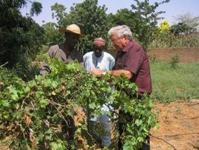 Entretien : Dov Pasternak, spécialiste du développement agricole africain «L'Afrique a besoin d'une révolution verte pour sortir de la pauvreté»