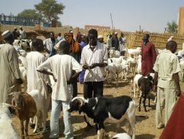 Bulletin de veille - Spécial « Organisations paysannes » n°1