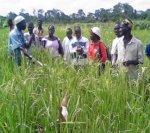 Gouvernance mondiale des produits agricoles : Me Wade propose un mécanisme institutionnel international