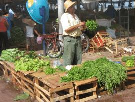 Développement des filières courtes de commercialisation: contribution à la souveraineté alimentaire