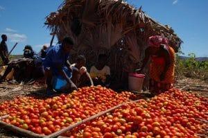 Bulletin de veille - Spécial « Organisations paysannes » n°2