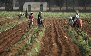 Agro-business : le Sénégal veut louer 400 000 hectares de terres à l'Arabie Saoudite