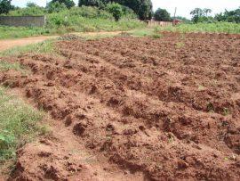 Atelier national sur le conseil à l'exploitation familiale au Bénin:Une marche vers l'autosuffisance alimentaire