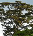 Une fiche pédagogique sur les droits sur la terre et sur les ressources naturelles