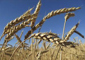 La hausse des prix alimentaire fait craindre des émeutes de la faim
