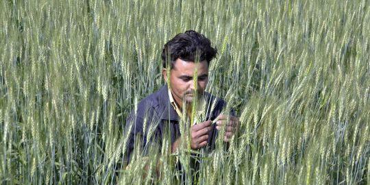 Le réchauffement climatique menace l'agriculture