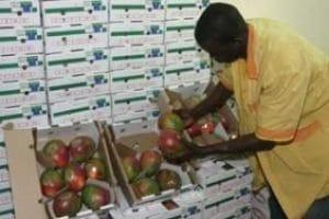 Fruits et légumes au Mali : Pour une meilleure politique d'exportation