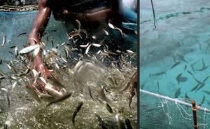 L'aquaculture