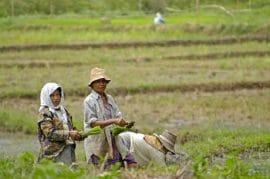 L'agriculture menacée par le réchauffement climatique