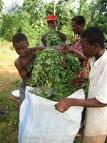 Beni : rentrer cultiver au village pour investir en ville