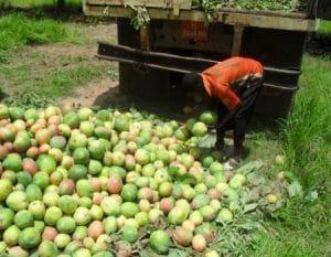 Agriculture: Valoriser les produits de cueillette