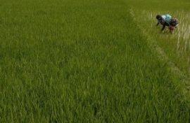 Désordres agricoles mondiaux