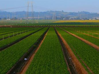 Serons-nous capables de nous nourrir en 2050?