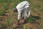 Le projet capitalisation de la FAO et le warrantage