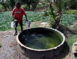 Les problèmes des paysans africains germent au Nord