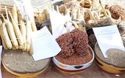 6ème foire nationale agro-sylvo-pastorale : étalage de richesses et performances du secteur rural