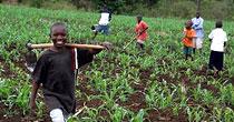 Promotion de l'agriculture familiale : les femmes africaines en campagne