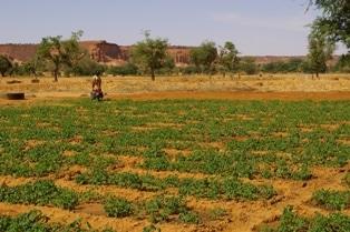 Guide pratique de la culture de la pomme de terre en Afrique de l'Ouest