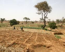 Le Congo cède 80.000 ha de terre à une société sud-africaine
