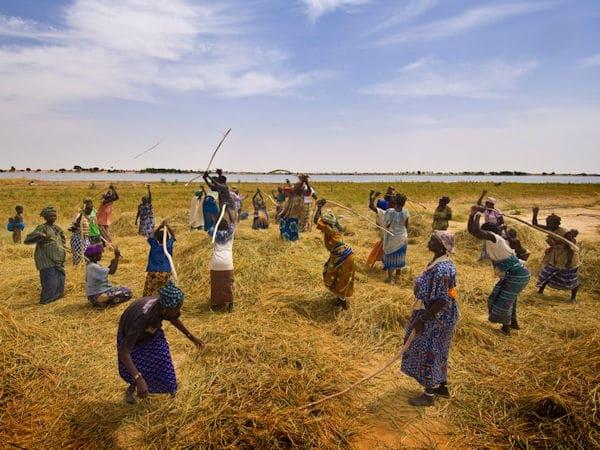 Mali: Réunion du Conseil exécutif national de l'agriculture : ON AVANCE !