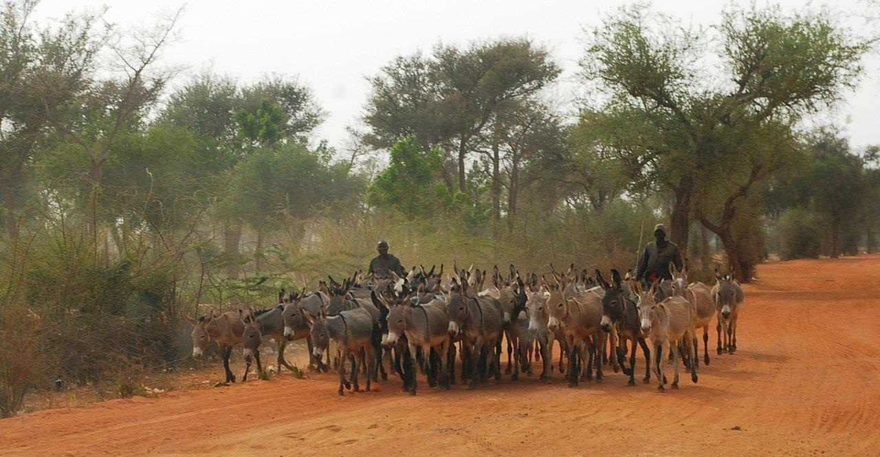 Bulletin de veille n°174 - 24 mars 2011