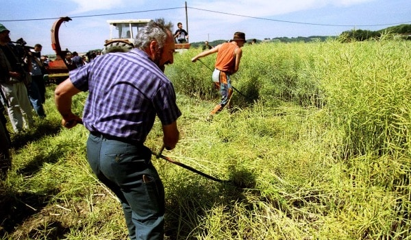 The Battle for Biodiversity: Monsanto and Farmers Clash