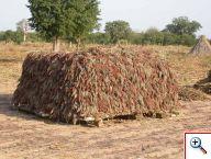 Comme annoncé, les récoltes de la dernière campagne agricole du Burkina sont bonnes !