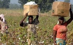 Cameroun : la nouvelle banque agricole dans le pipe