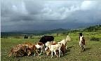 Agriculture. Quand l'Ethiopie ne touche plus terre...