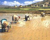 Sécurité alimentaire : la volatilité des prix ne se limite pas aux marchés internationaux