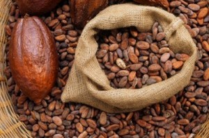 Le cacao camerounais promet