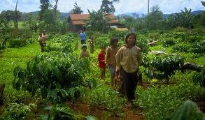 Appel à propositions de communications et notes de lecture pour le numéro 62 de la revue Autrepart sur « La petite agriculture face aux bouleversements économiques et climatiques »